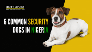 6 Common Security Dogs in Nigeria